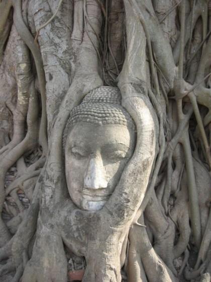 Buddha im Baum verwachsen