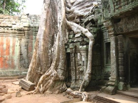 Baum umschließt mit seinen Wurzeln Tempel