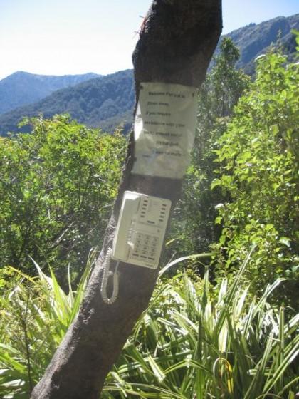 Ein Telefon mitten im Wald an einem Baum