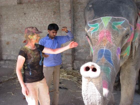 Elefant Holi