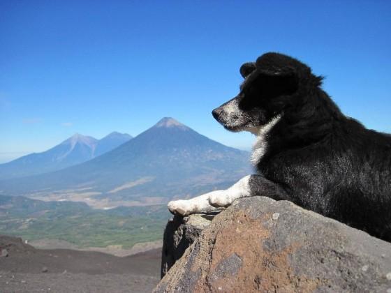 Hund vor Vulkan