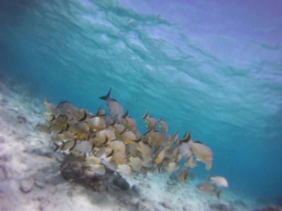 Schwarm Fische