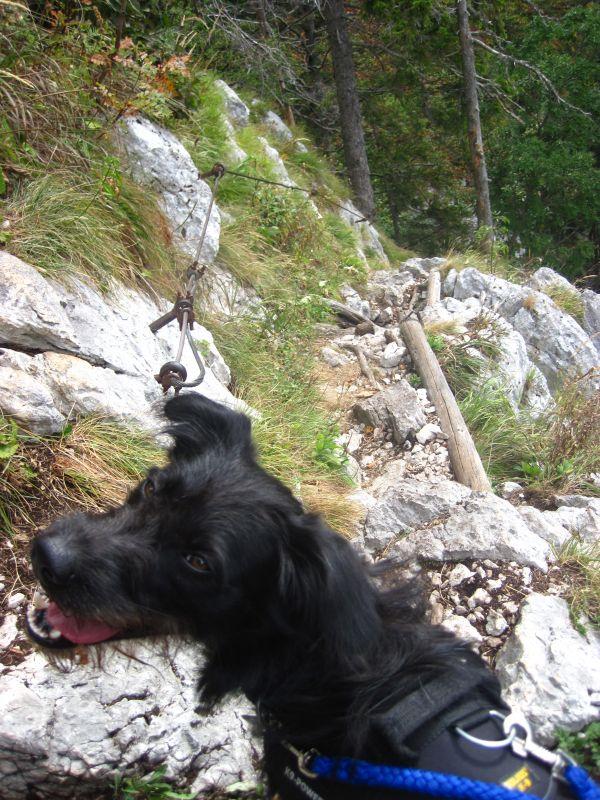 Mit Hund auf dem Steig